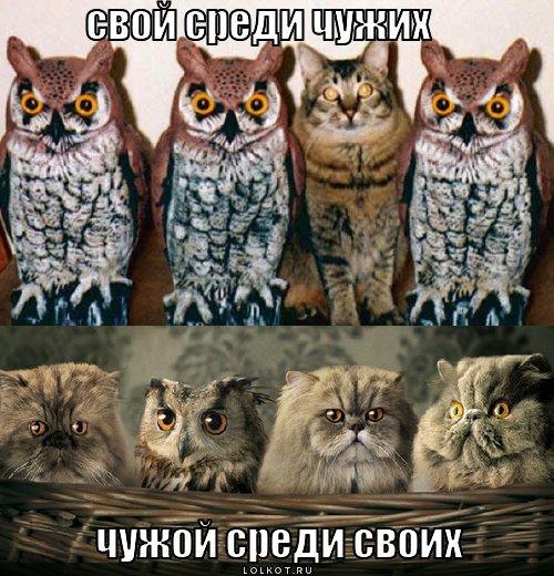 svoy-sredi-chuzhih_1322487150